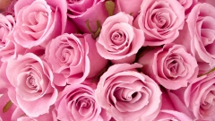 Букет живых роз