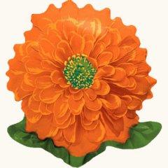 Циния Оранжевая